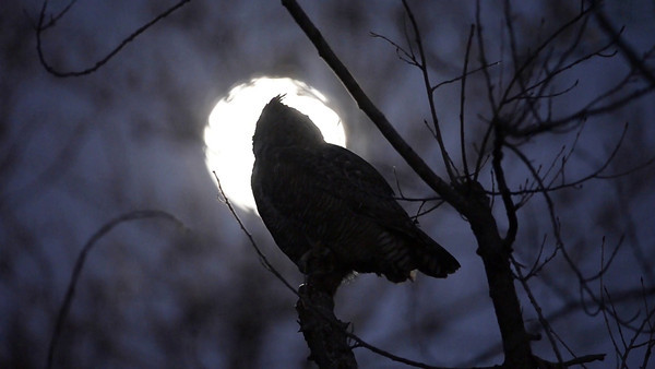 owlmoon01132014