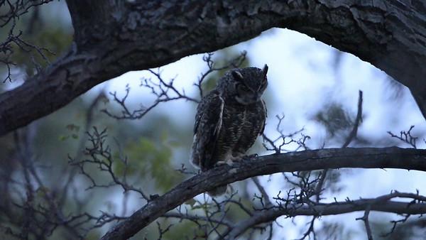 20140312-Owls03102014